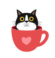 kitten in cup for t-shirt print vector image vector image