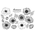 collection set of anemone flower and leaves vector image vector image