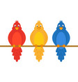 colorful amusing parrots vector image
