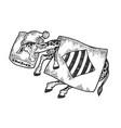 cartoon sleeping giraffe sketch engraving vector image