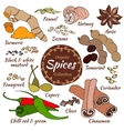 collection of spice isolated on white vector image