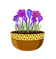 crocuses in a pot early spring vector image vector image