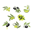 Green and black olives set vector image vector image