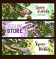 spices and herbs farm store banners vector image vector image