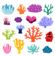 coral sea coralline or exotic cooralreef vector image vector image