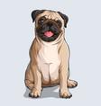 cute beige pug dog sitting vector image vector image