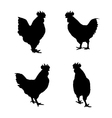 image of an chicken vector image vector image