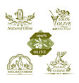 olives icons for organic olive oil vector image vector image