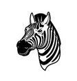 zebra animal head black and white african horse vector image