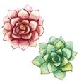Nice watercolor succulents