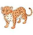 tiger on white background vector image