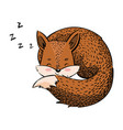 cartoon sleeping fox a lovely stylized fox vector image vector image