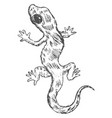 gecko top view vector image