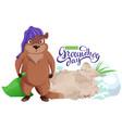 happy groundhog day sleepy angry woodchuck got vector image vector image