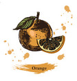 orange sketchvintage ink hand drawn of vector image vector image