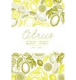 vintage citrus banner template lemon tree design vector image vector image