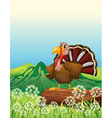 A turkey above a trunk at the hilltop vector image vector image