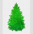 christmas green spruce tree vector image vector image