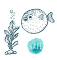 fugu fish drawing on white background hand drawn vector image vector image