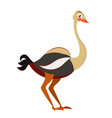 cute ostrich in flat isolated on white background vector image