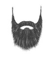 long gray beard vector image