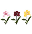 collection colorful orchid flowers vector image vector image