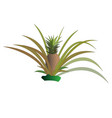 pineapple bush with fruits isolated vector image