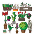 set of indoor plants vector image