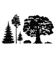 set forest trees black and white vector image