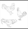 sketch cocks vector image