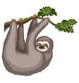 Sloth vector image