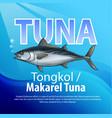 Tongkol or mackerel