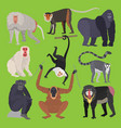 different types of monkeys ape breed rare animal vector image vector image