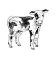 hand drawn calf vector image vector image