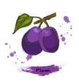 plum ink sketch of hand drawn plum vector image vector image
