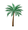 tropical dark green palm tree isolated on white vector image vector image