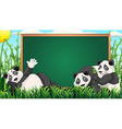 Board design with three pandas on grass vector image vector image