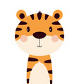 cartoon cute tiger isolated on white background vector image