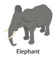 elephant icon isometric style vector image vector image