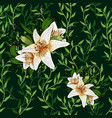 liana spreads green leaves creeper and lily flower vector image