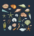 ocean exotic set with sea shells and stars vector image