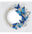 Round Banner with Blue Butterflies Morpho vector image vector image