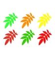 Set rowan leaf vector image vector image