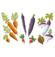 Tuber Vegetables Collection vector image vector image