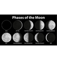 Phases of the Moon vector image vector image