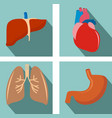 set of organs - lungs liver heart stomach vector image vector image