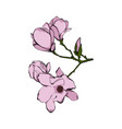 tender pink flower twig isolated on white vector image vector image