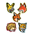 wild dogs and wild cats mascot collection vector image vector image