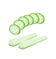 Delicious Fresh Cucumber Slices on White vector image vector image