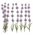 sprigs lavender vector image vector image